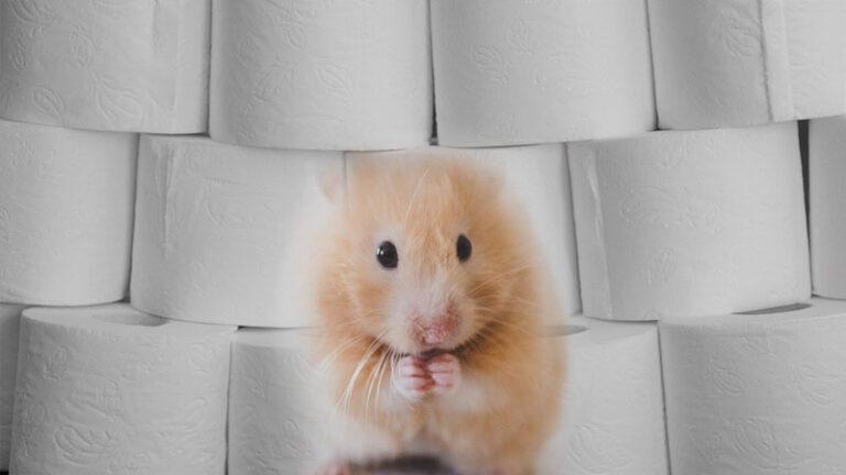 Werden Hamsterkäufe jetzt zur Gewohnheit